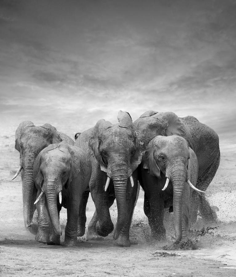 Free Elephant Stock Photos - 59293263