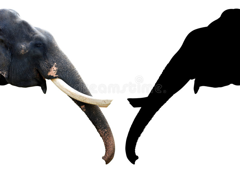 Download Elephant Royalty Free Stock Photo - Image: 6015465