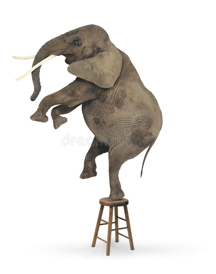 Elephant Acrobat Stock Illustration Illustration Of