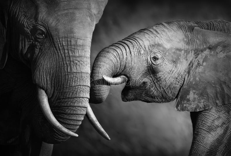 Elephant affection (Artistic processing) stock photography