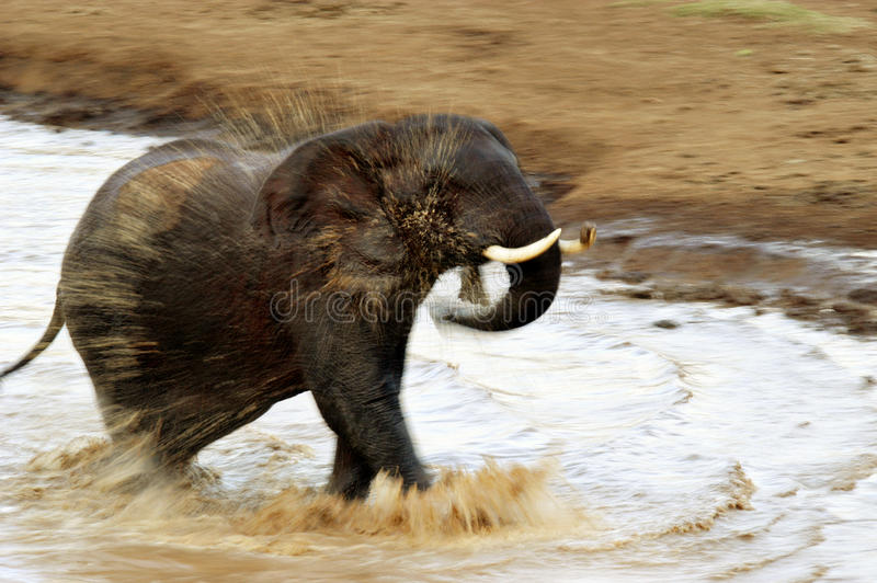 Download Elephant, Africa stock image. Image of movement, distant - 9787301