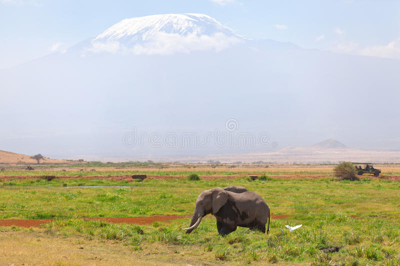 Elephant in Amboseli. Elephant in front, Kilimanjaro at the background shot at Amboseli national park, Kenya royalty free stock photo