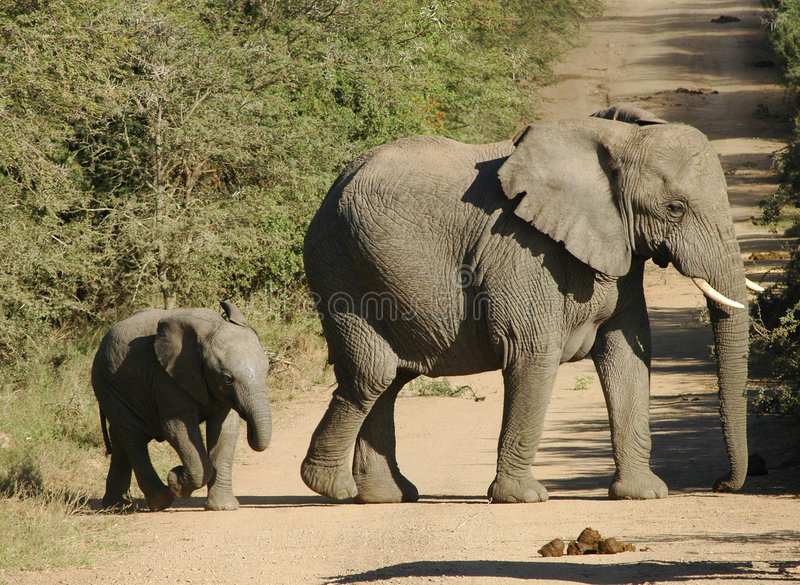 Download Elephant And Baby Royalty Free Stock Image - Image: 1421946