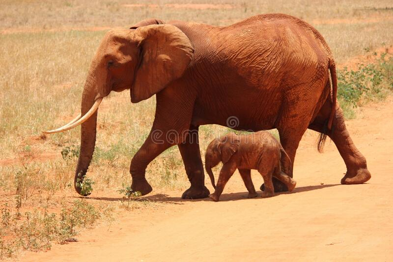 1 Elephant Beside On Baby Elephant Free Public Domain Cc0 Image