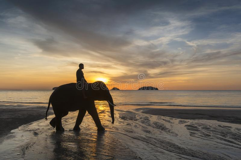 Elephant on a background of sunset and sea on Koh Chang, Thailand. stock image