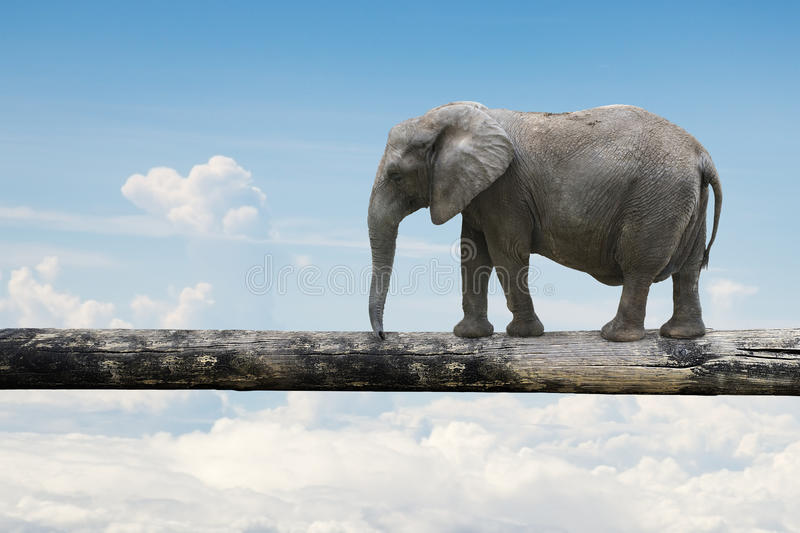 Elephant balancing on tree trunk stock photo