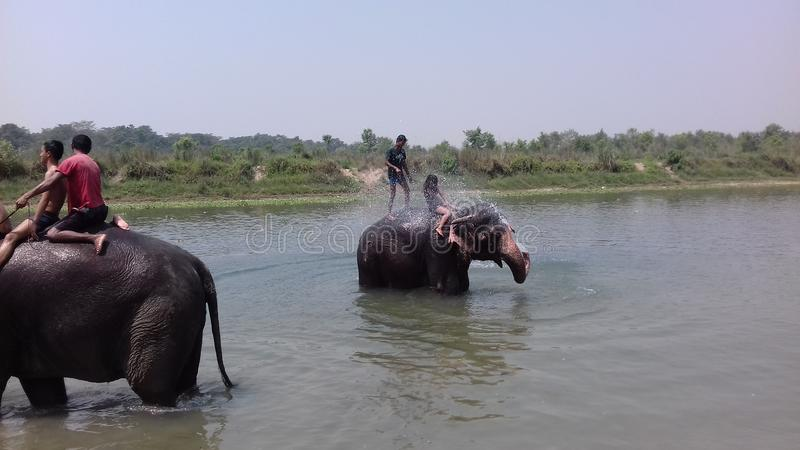 Elephant bath. This is a picture of chitwan national park of Nepal where many local and tourists visit for elephant bath royalty free stock photo