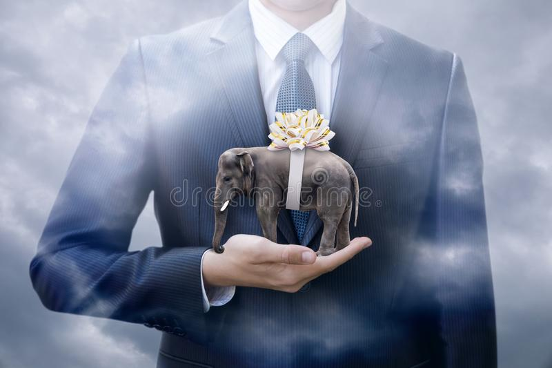 Elephant with bow in hand of a businessman in the form of a gift. stock image
