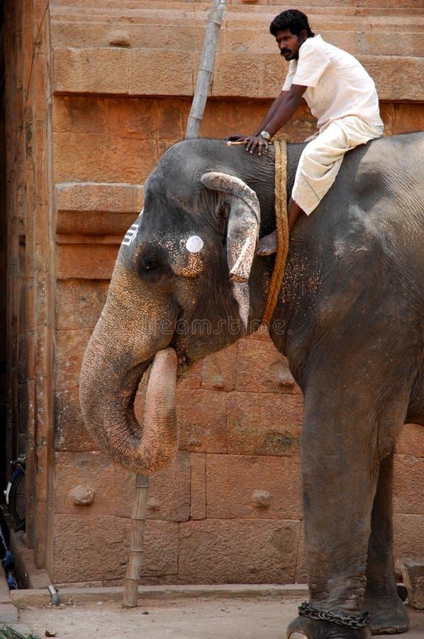 Elephant at Brihadeshwara Temple, India royalty free stock photos