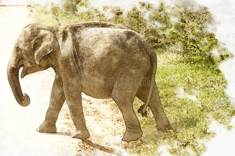 Elephant calf photo with pictorial effect. Image of the Elephant calf photo with pictorial effect royalty free stock image