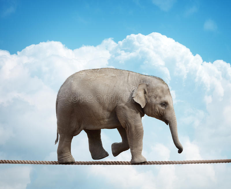 Elephant calf on tightrope. Elehant calf balancing on a tightrope concept for risk, conquering adversity and achievement stock photos