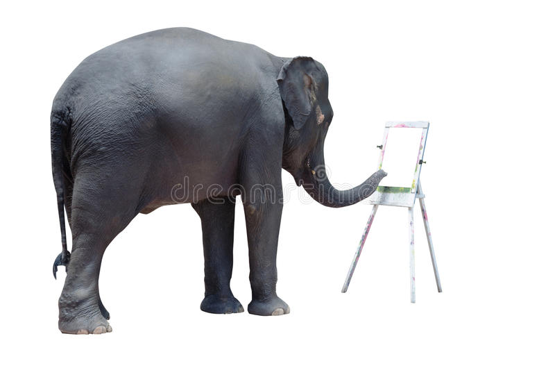 Elephant coloring show. On a white background stock images