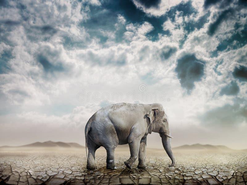 Elephant in the desert royalty free illustration
