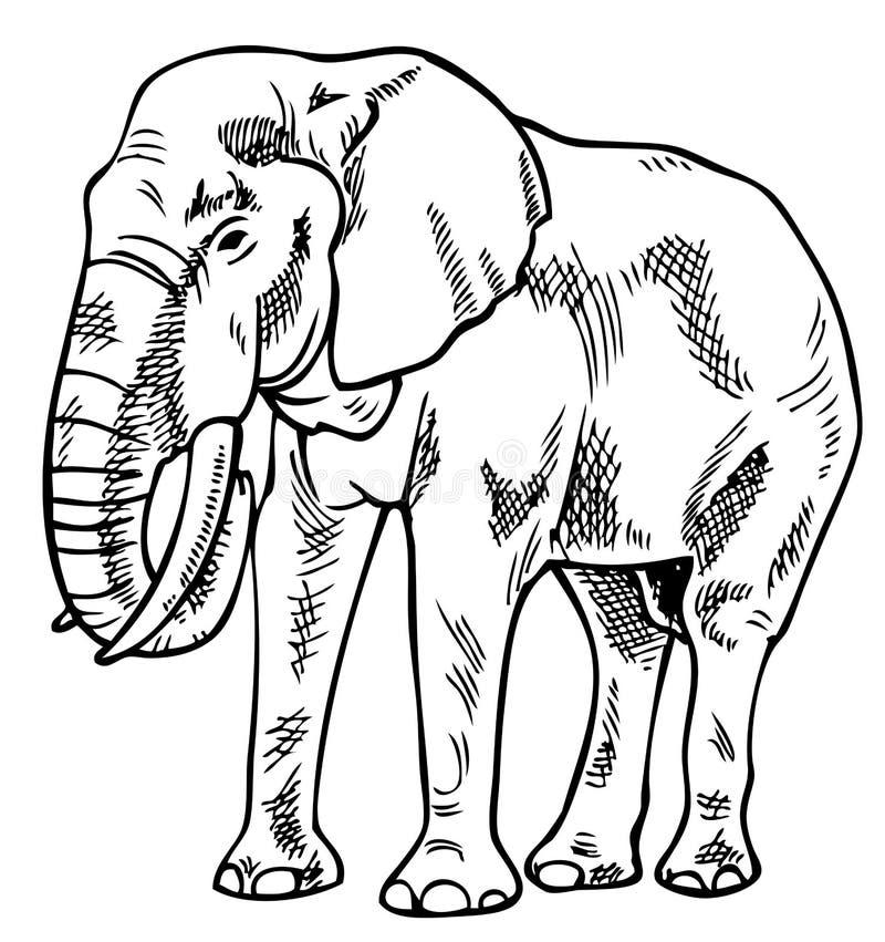 Elephant drawing royalty free illustration