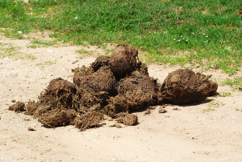 Elephant dung. A heap of African elephant dung in a game park in South Africa. In Africa the dung is used to produce paper stock photos