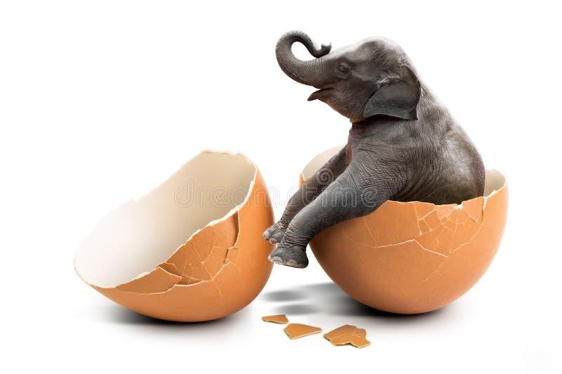 Elephant in eggshell royalty free stock photo