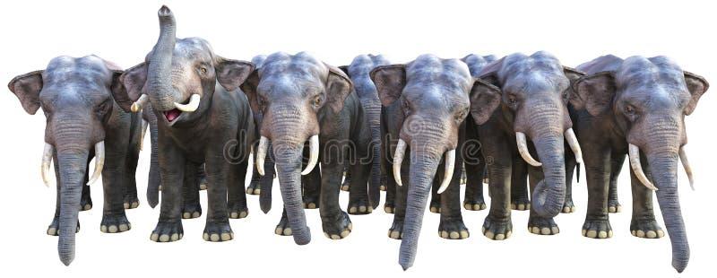 Elephant, Elephants, Herd, Wildlife, Isolated. Illustration of a herd of Indian elephants. Each elephant is facing the camera. isolated on white royalty free illustration