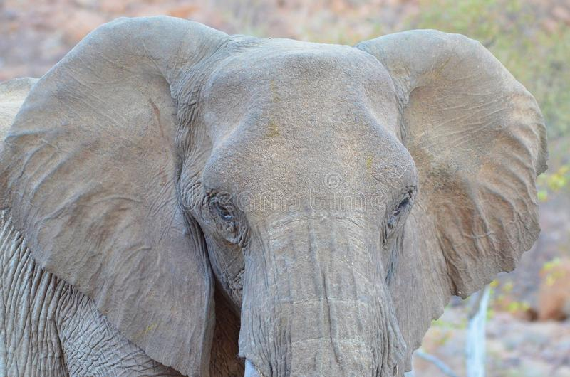 Elephant, Elephants And Mammoths, Wildlife, Terrestrial Animal Free Public Domain Cc0 Image