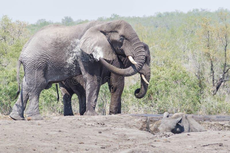 Elephant meet Rhino stock photo
