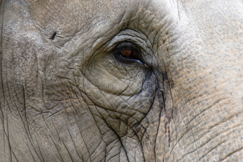 Elephant eye royalty free stock photography