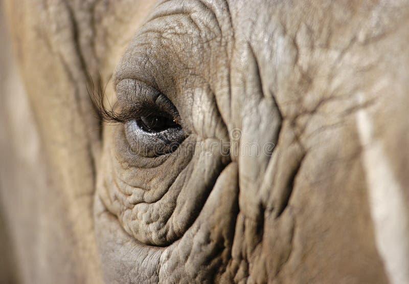 Elephant eye royalty free stock image