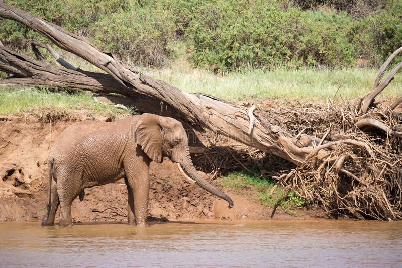 Elephant family on the banks of a river in the middle of the National Park stock photography
