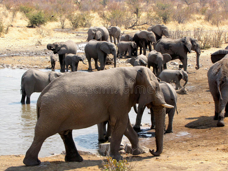 Download Elephant family stock photo. Image of national, park - 12570690