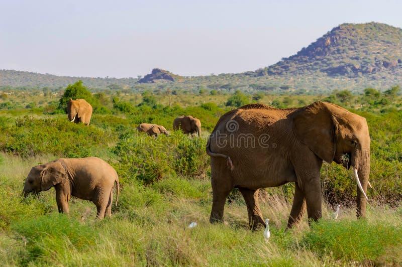 A elephant family in the bush stock photo