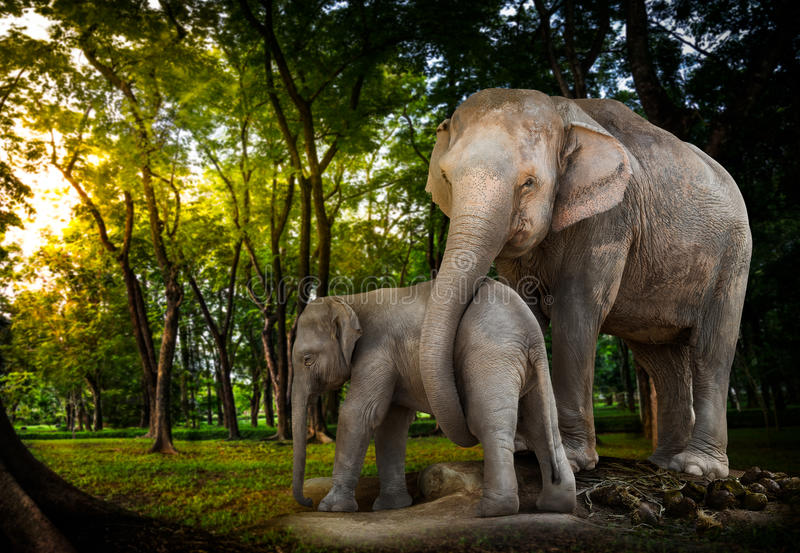 Elephant family in forest royalty free stock photo
