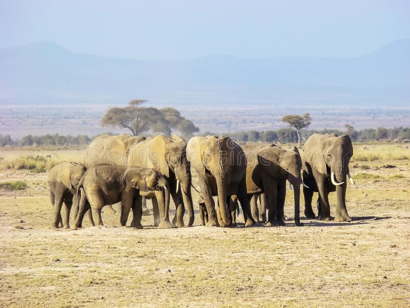 Elephant family at Maasai Mara NR, Kenya royalty free stock photos