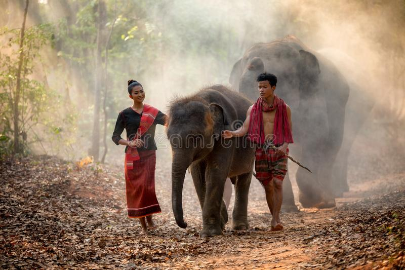 Elephant family in Surin walking in forest at Chang royalty free stock photos