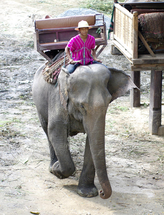 Elephant Farm In Northern Thailand Editorial Photo