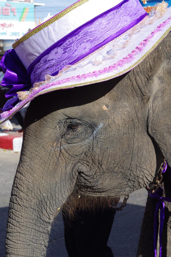 Elephant festival in Surin stock images
