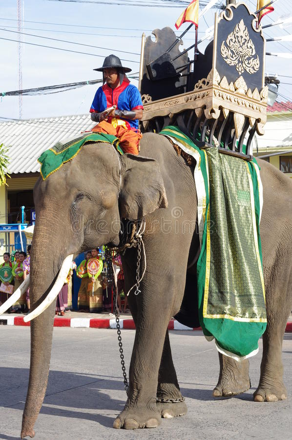 Elephant festival in Surin royalty free stock photography