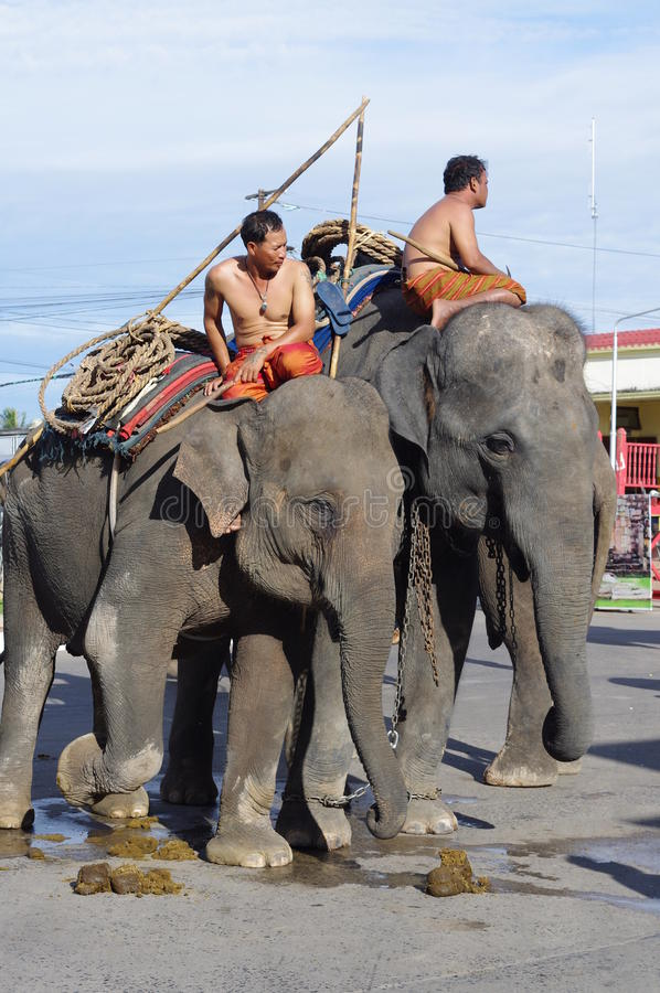Elephant festival in Surin royalty free stock images