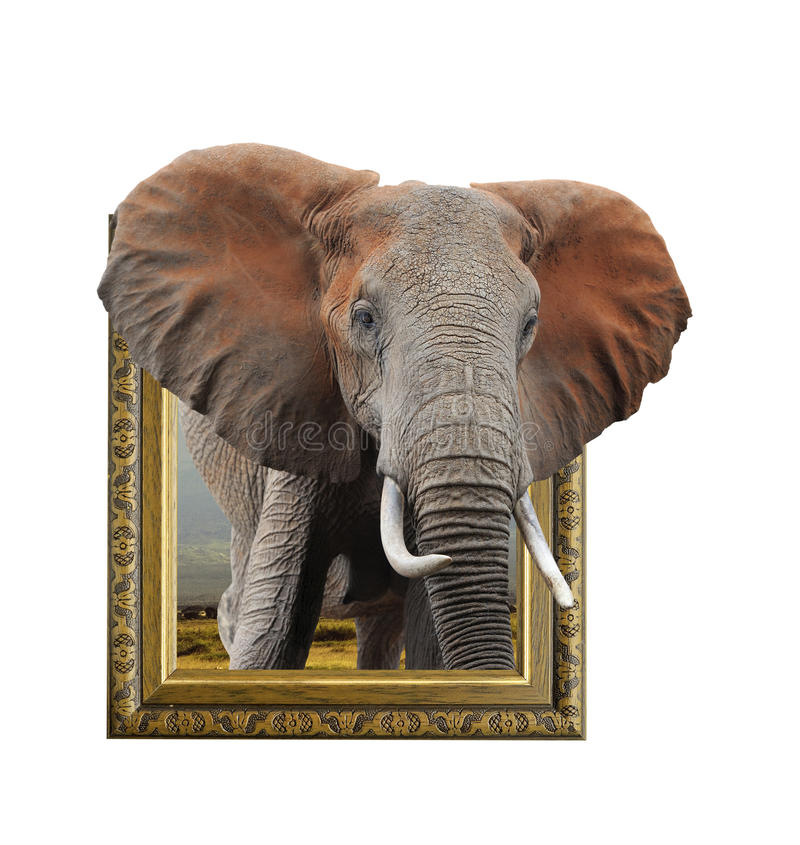 Elephant In Frame With 3d Effect Stock Photo - Image of background ...