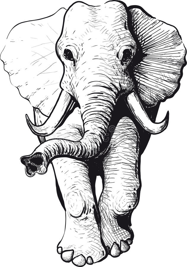 Elephant front view vector illustration
