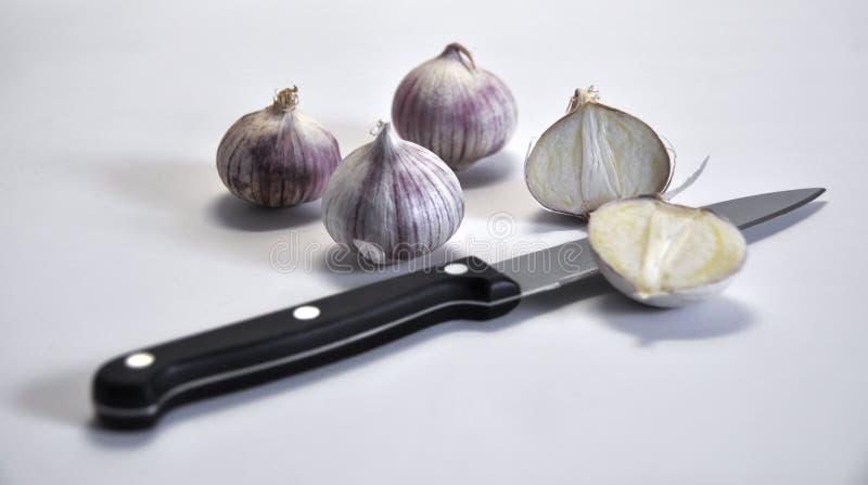 Download Elephant Garlic on white stock image. Image of italian - 11895141