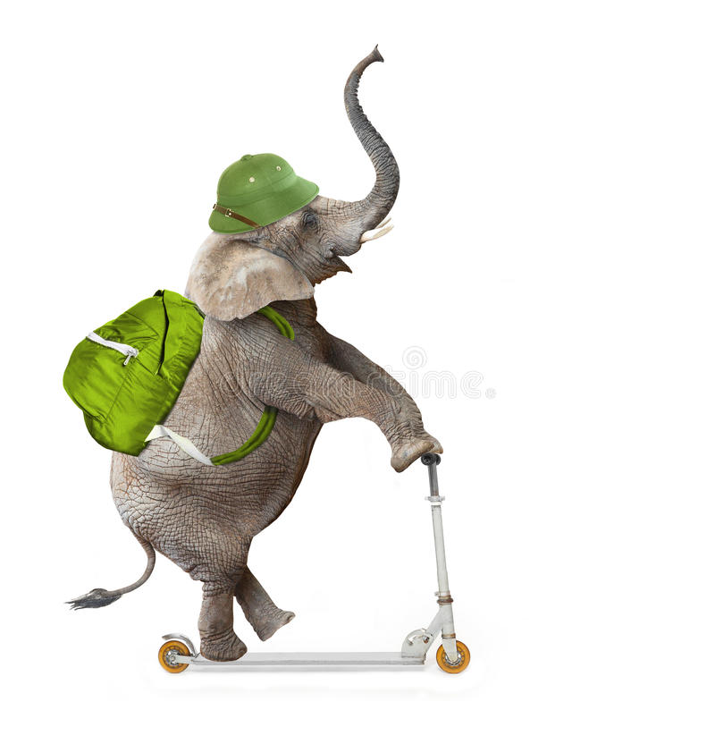 Elephant going to holidays. Happy elephant as a adventurer on push scooter going to holidays. Animal isolated on white background. Digital collage on leisure stock images
