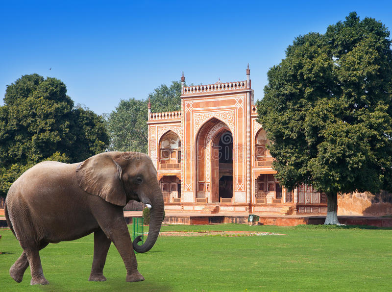 Elephant on a grass before Gate to Itmad-Ud-Daulah's Tomb (Baby Taj) at Agra, Uttar Pradesh, India. Elephant on a grass before Gate to Itmad-Ud-Daulah's Tomb ( stock images