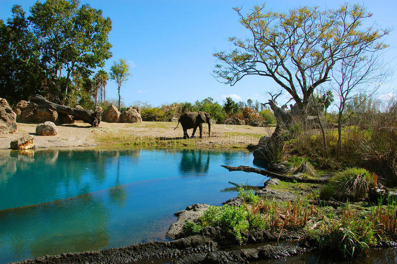 Elephant habitat. At the Kilimanjaro Safari in Disney's Animal Kingdom royalty free stock photo