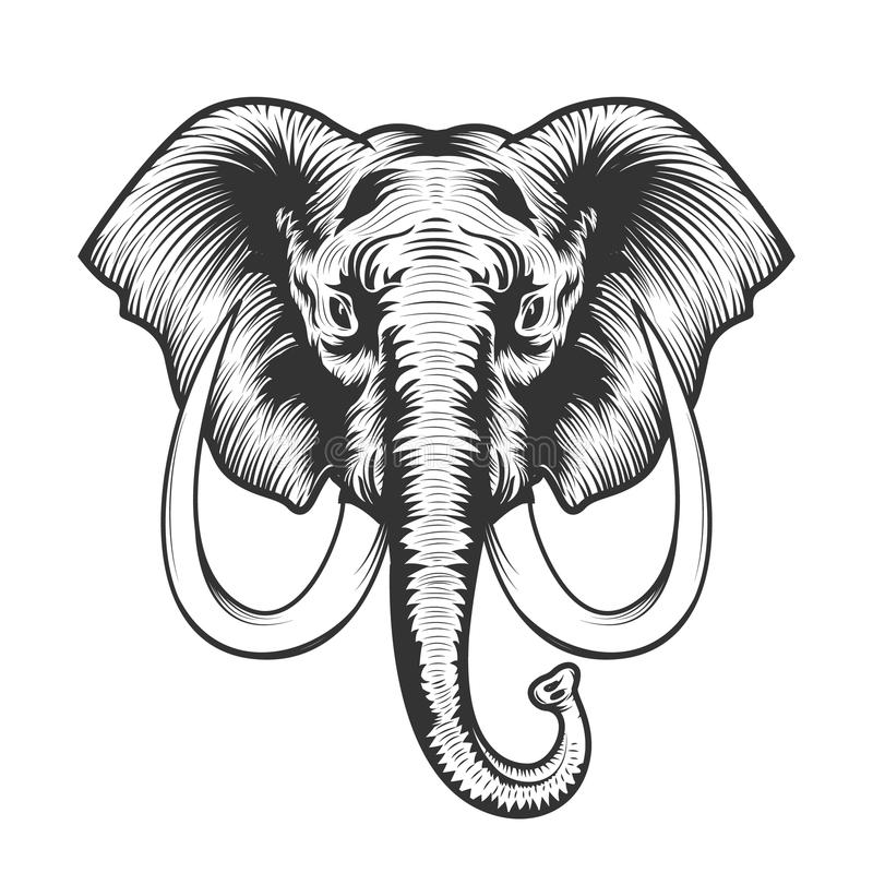 Elephant head illustration. stock illustration