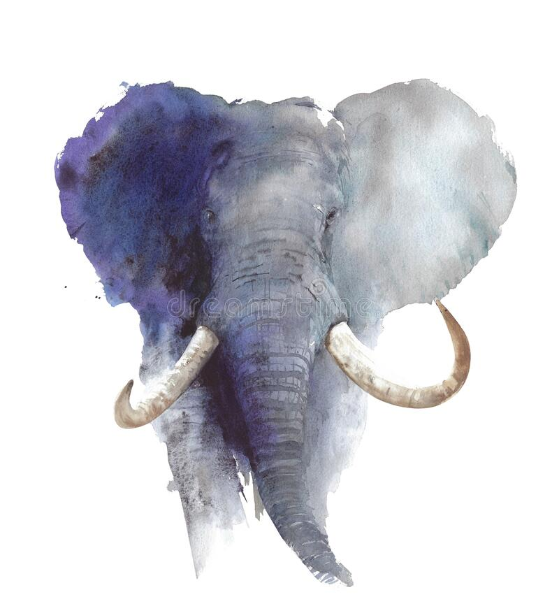 Free Elephant Head Portrait African Wildlife Endangered Specie Safari Animal Watercolor Painting Illustration Isolated On White Backgro Royalty Free Stock Photos - 173772918