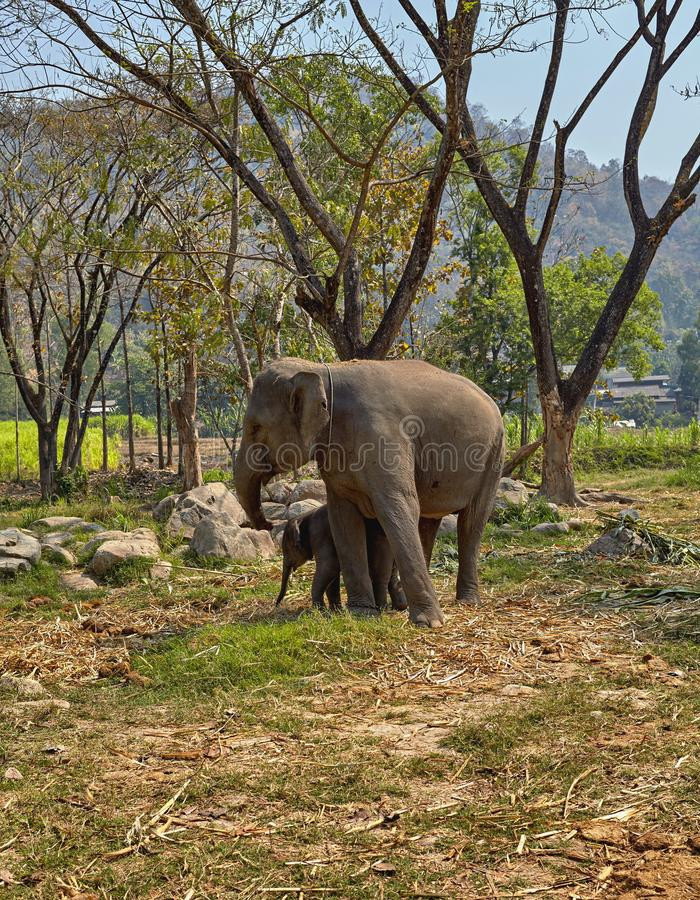 Elephant and her child stock photography