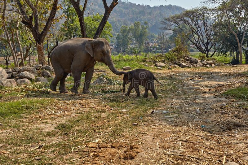 Elephant and her child stock image