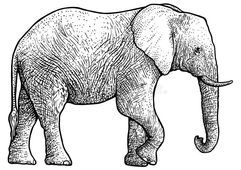 Elephant illustration, drawing, engraving, ink, line art, vector royalty free illustration