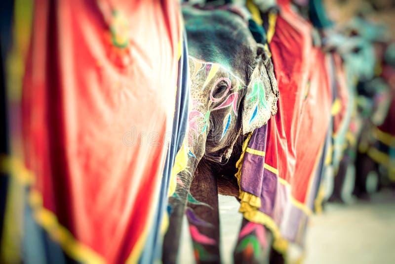Elephant. India, Jaipur, state of Rajasthan. Elephant. India, Jaipur, state of Rajasthan royalty free stock photo