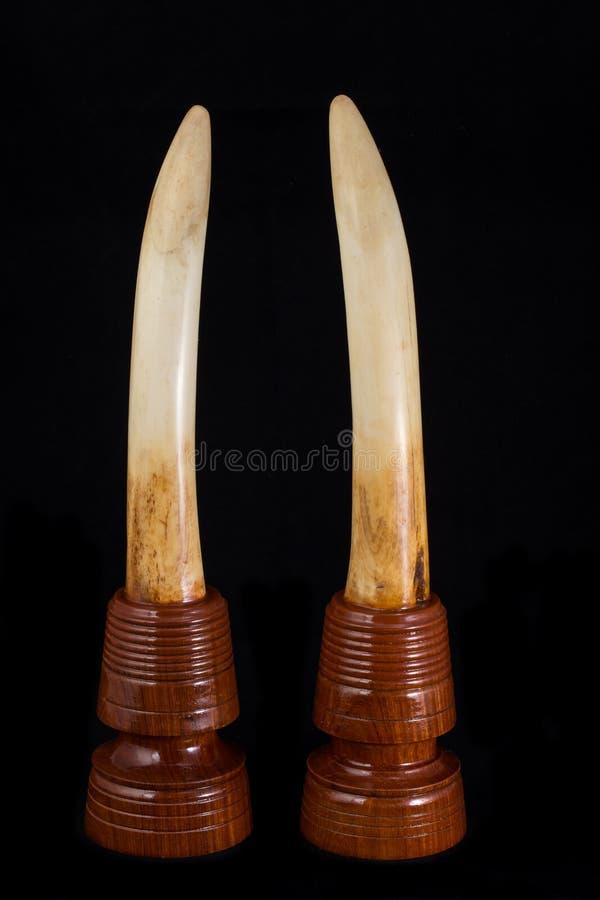 Elephant ivory stock photo