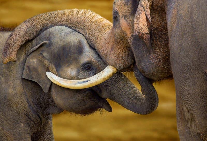 Download Elephants stock image. Image of wildlife, large, african - 110934649