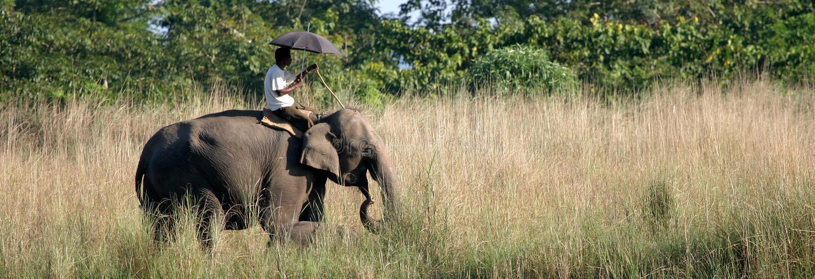 Elephant with Mahout royalty free stock photos
